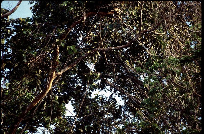 Peru2_004.jpg
