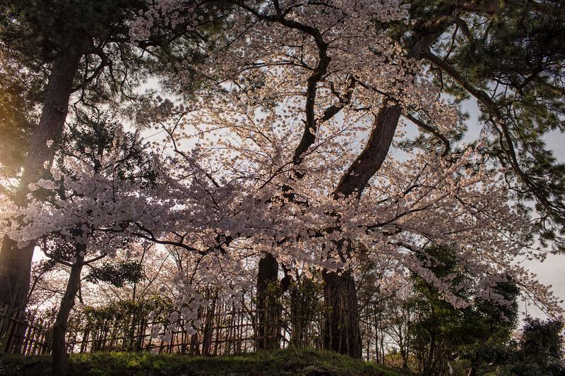 Kanazawa 080413 04.jpg