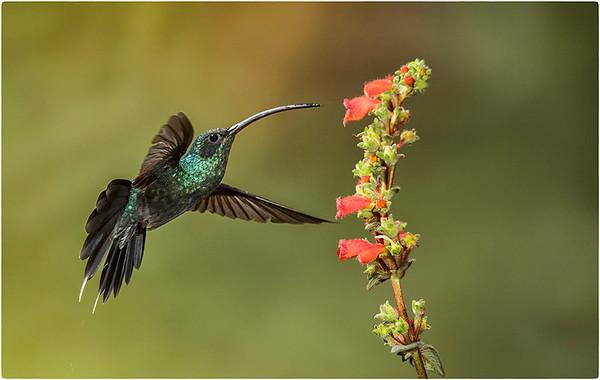 Costa Rica - Oct 2013