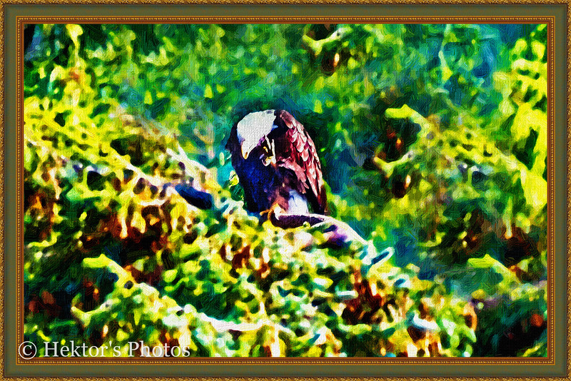 Lighthouse-Eagles-Totems Excursion-18.jpg
