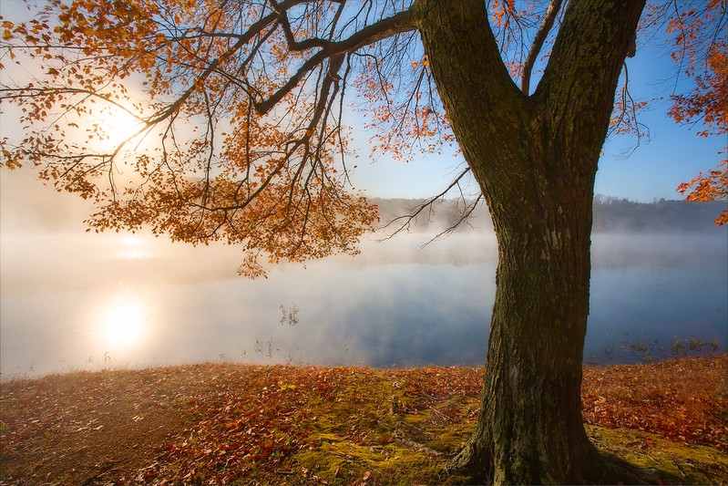 laurel hill lake tree with fogweb.jpg