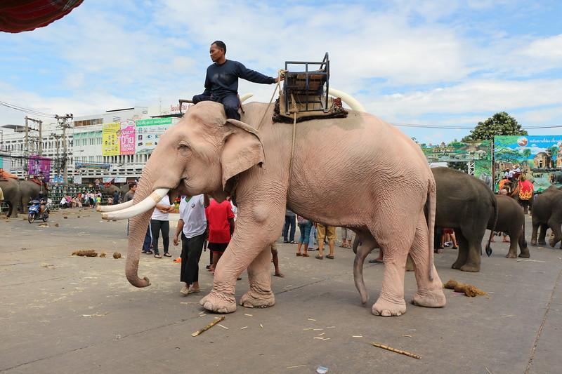 2014-11-14 Surin Elephant Welcome Feast 823.JPG