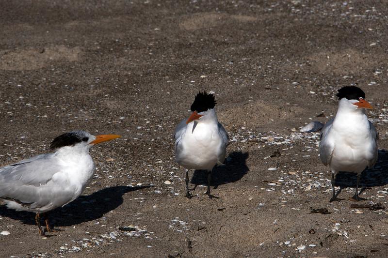 venice gulls 1 (1).jpg