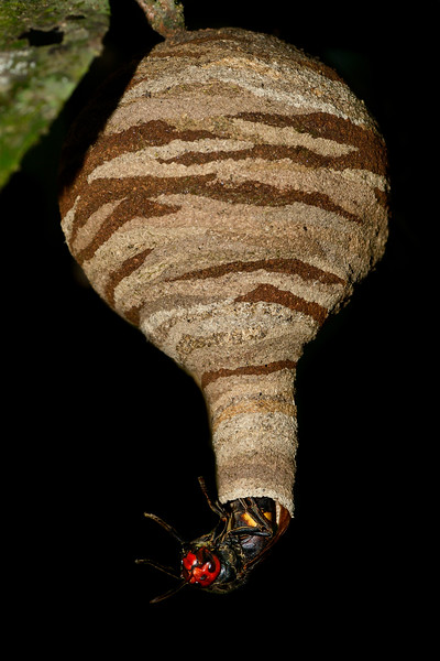 Potters-wasp-and-its-creation-agumbe.jpg