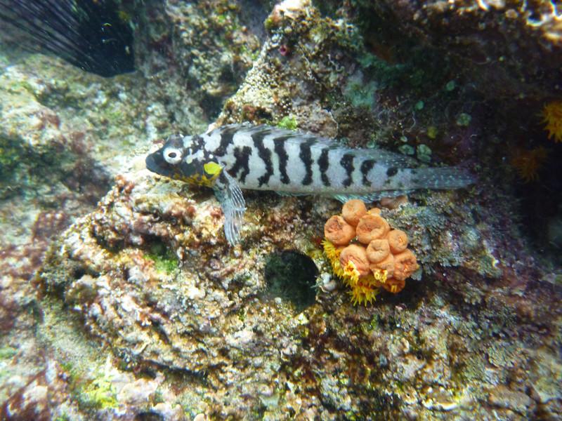Galapagos Land Underwater