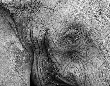 Elephants Remembered