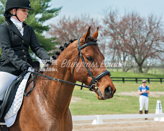 2017 Paul Frazier Memorial Show - Dressage