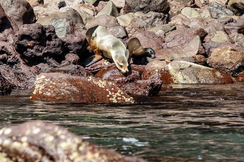 Galapagos-3213.jpg