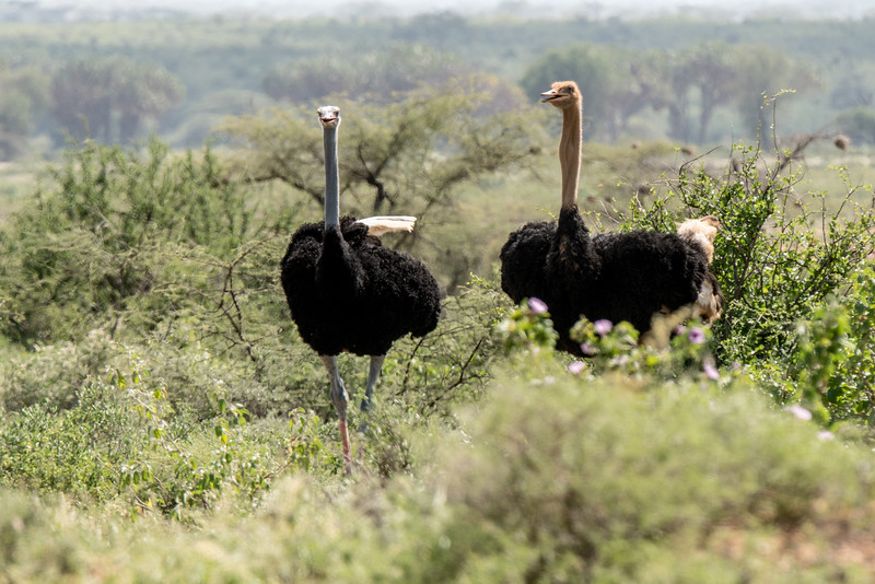 Samburu (48 of 70).jpg