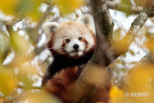 2020 Gaia Zoo