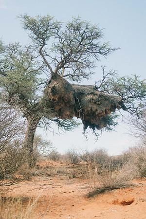 Kalahari Wilderness Drift - Mark Murray