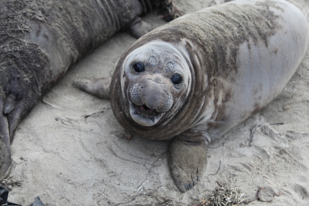 . A pup seal shows it\'s first smile. (photo credit: © NGT )