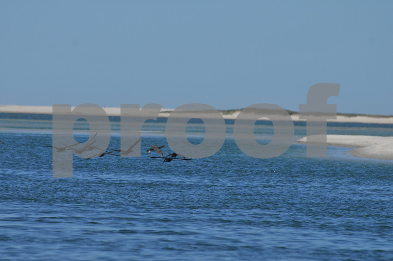 Pictues from cape and father day 121.JPG