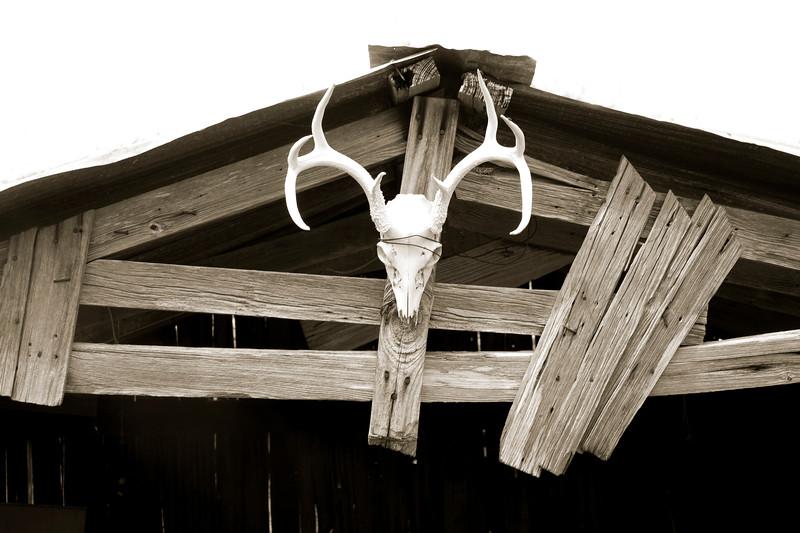 09-02-07 Coleman barn with skull 2639.jpg