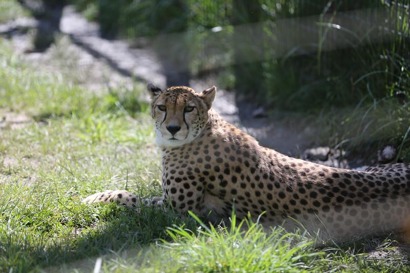 SafariWest2017-56.jpg