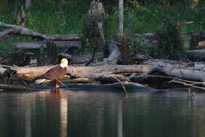Huntingburg Eagle Nest - May 26