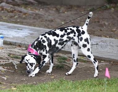 3-3-18 Dog 8