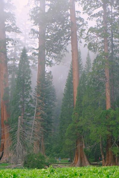California Day 6 Sequoia 05-30-2017 108.JPG