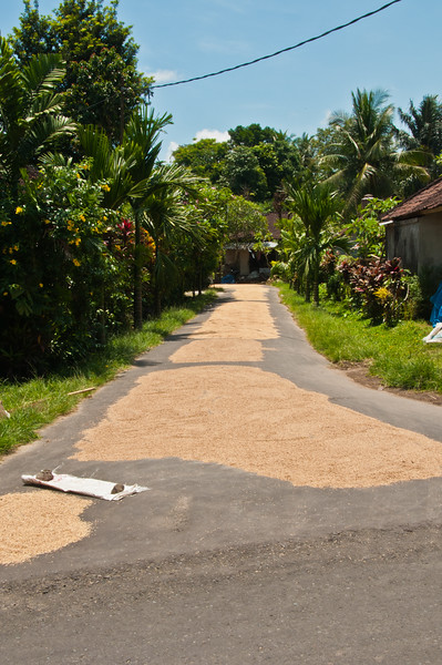 Bali - Ubud walk (25 of 31)