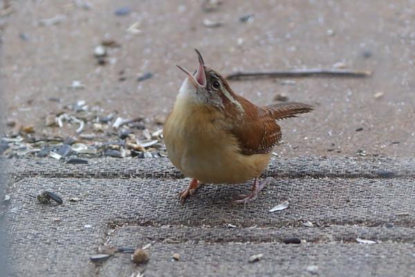 Birding 2021 February