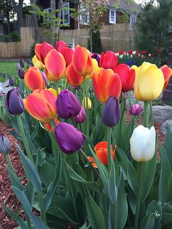 Villa Vogel: Flowers & Landscaping