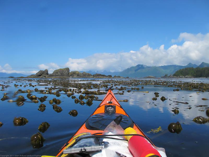 Looking north towards Brooks through the kelp.