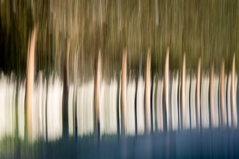 September 21 - Trees in motion, The Getty, Los Angeles.jpg