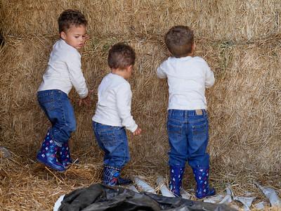 Three Little Boys (Fun Photos on the Farm)