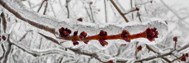 IceStorm-106.jpg
