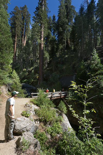 Sequoia_0358.jpg
