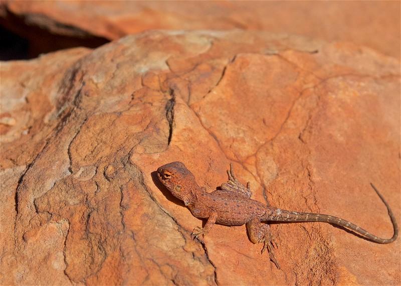 Uluru and the NT