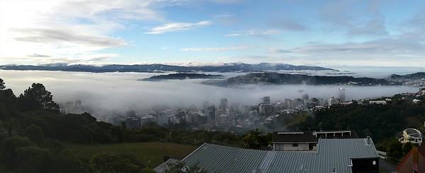 Wellington foggy a