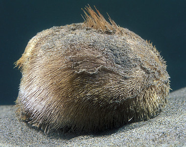 Guernsey Echinodermata