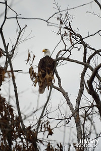 Eagles at Rocky Branch February 9