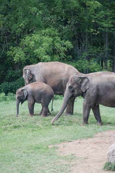 Syracuse Zoo August 2020-10.jpg