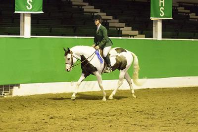 71 - Walk/Trot Hunt Seat Pleasure Open, Stallions/Geldings