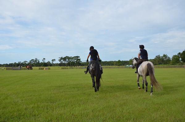 Schooling green horses  9/7/14- FL Horse Park