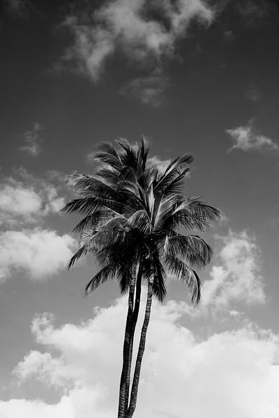 Stacking Palms