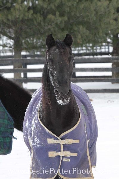 Horse Wearing a Blanket in the Snow
