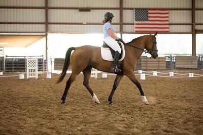 Horse 49