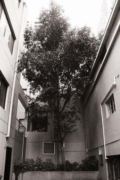 Davisons Place