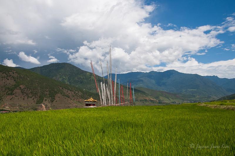 Bhutan-Punakha-8166.jpg