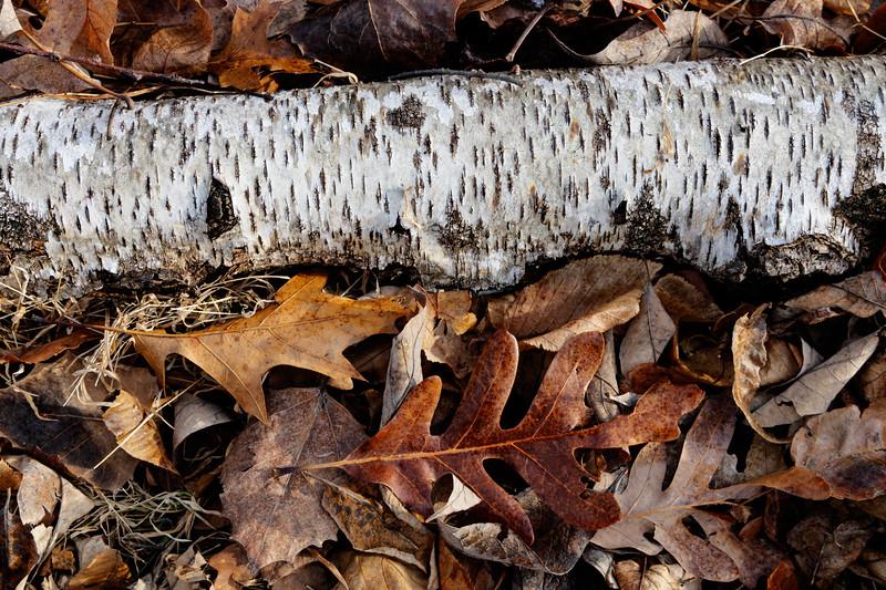 Birtch Wood.jpg