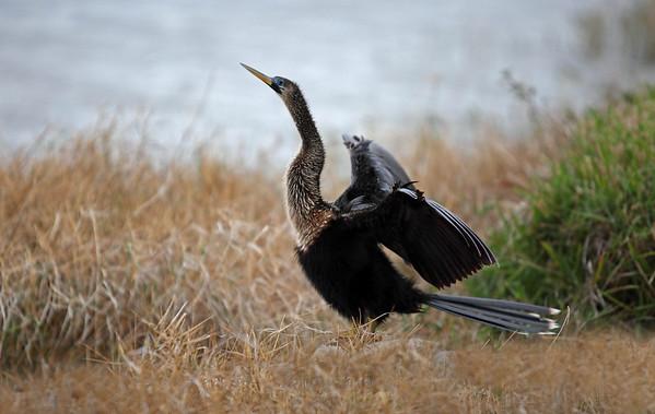 2010 - Birds