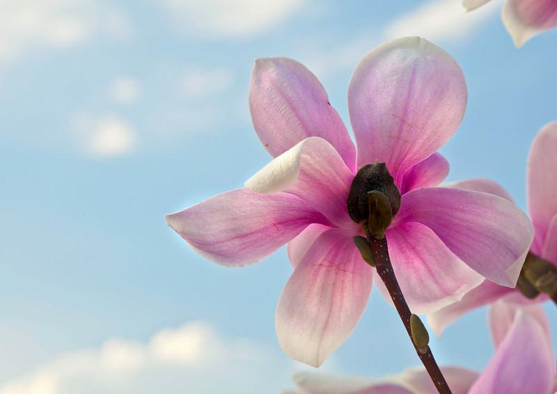 Magnolias12-0835-Edit copy.jpg