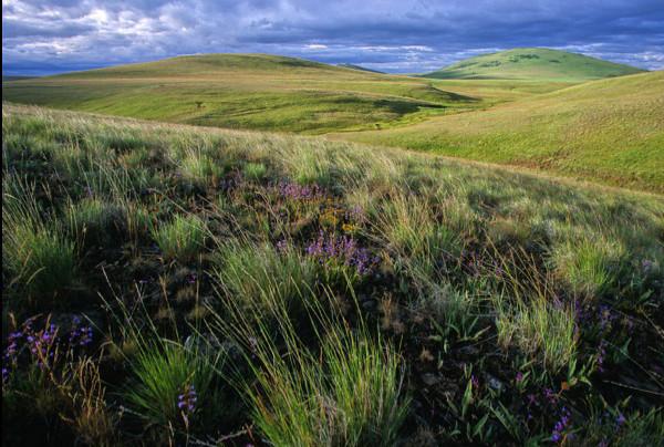 2 Prairies