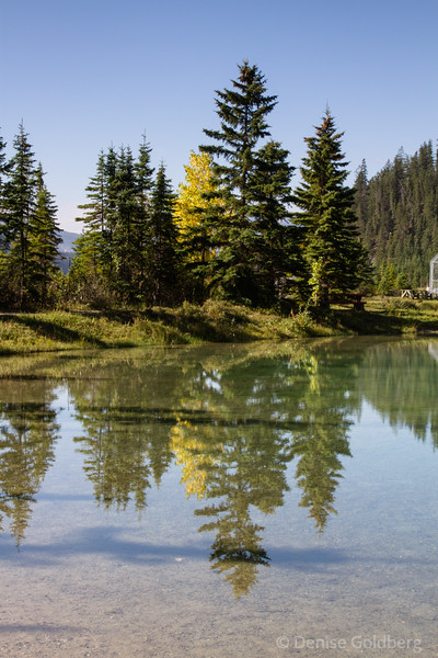 reflections, trees, in Field, BC