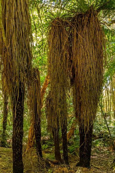 Mores Scenic Reserve - Versammlung der Waldgeister