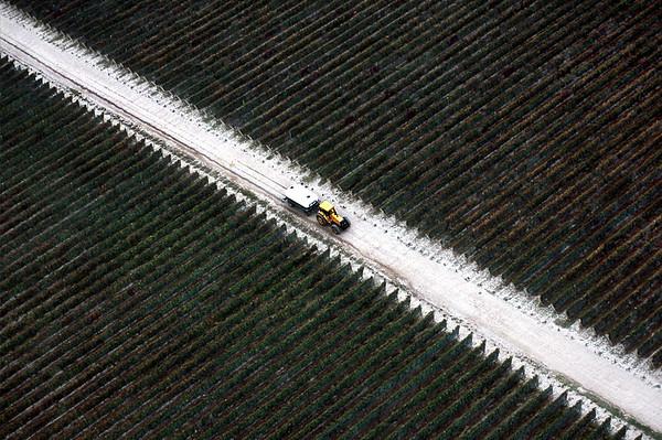 Noticias sobre el agropecuario argentino
