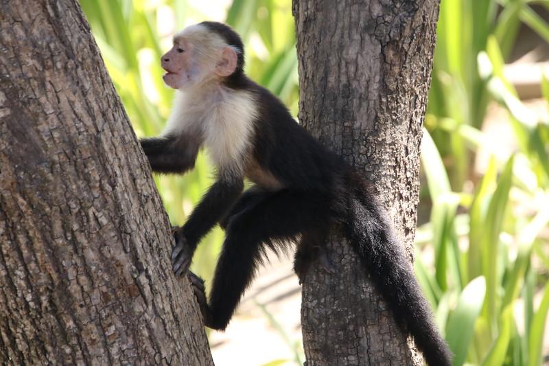 2020 Costa Rica 0226.JPG